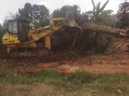 Uprooting Trees on Banda Road – Wakiso District